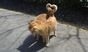 Cats Tales in a heart shape