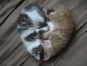 Cats Sleeping in a heart shape