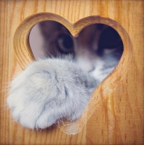 Cat paw in a heart shape Hole