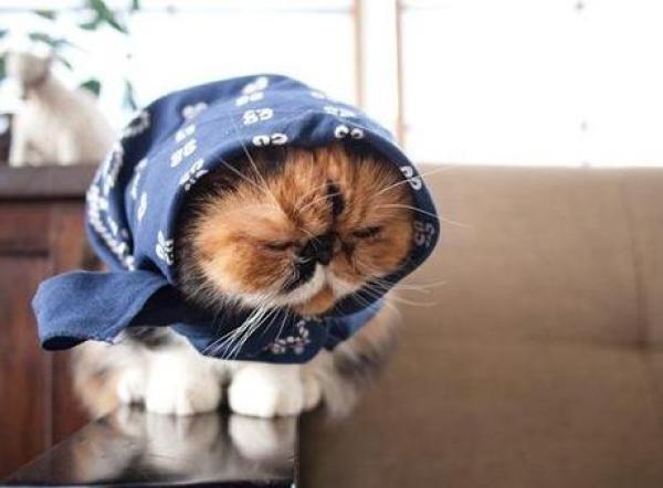 Cat Wearing Scarf