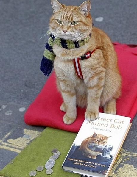 Cat Wearing Yellow and Blue Scarf