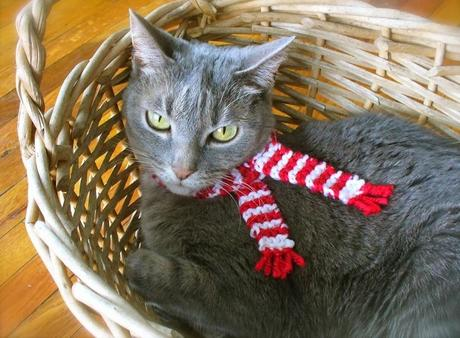 Cat Wearing Red Scarf