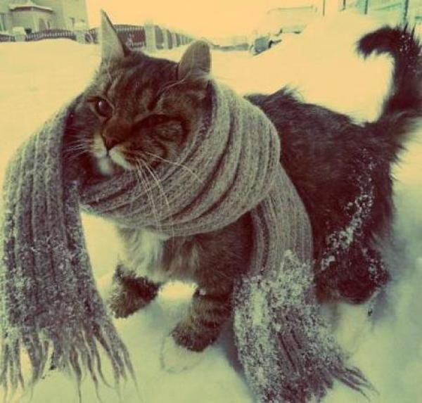 Cat Wearing Gray Scarf