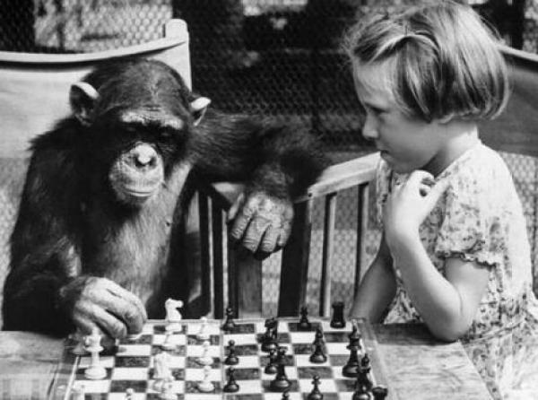Chimp playing Chess