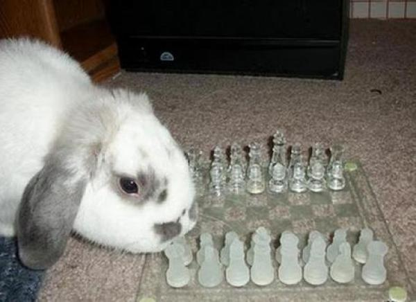 Rabbit playing Chess