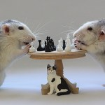 Top 10 Images of Animals Playing Chess
