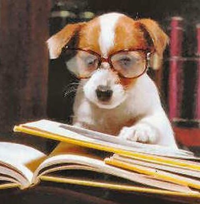 Top 10 Images of Dogs Dressed as Lawyers