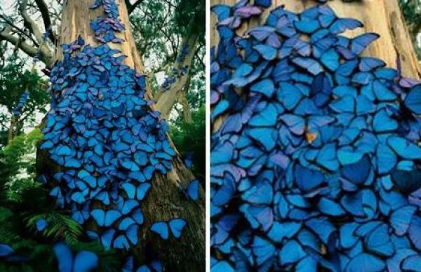 Butterfly Swarm on a tree