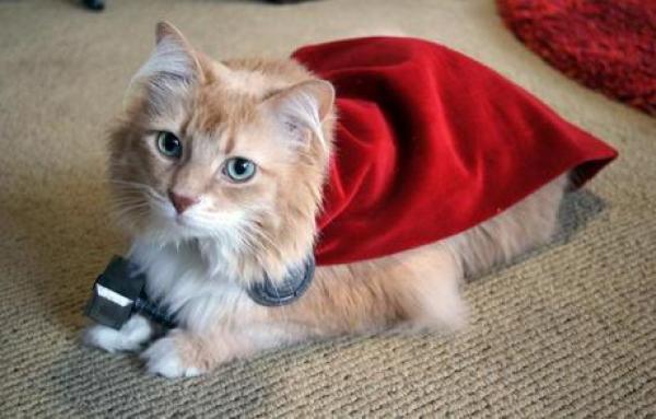 Superhero Cat Inspired By Thor
