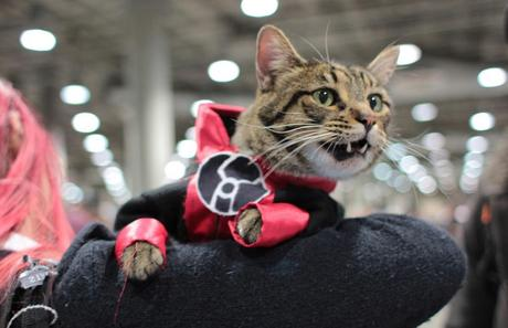 Superhero Cat Inspired By The Red Lantern