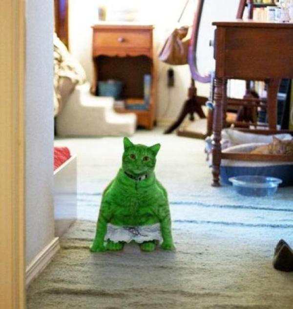 Superhero Cat Inspired By Hulk