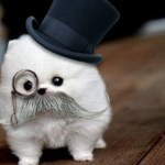Top 10 Best Images of Dogs Wearing Monocles