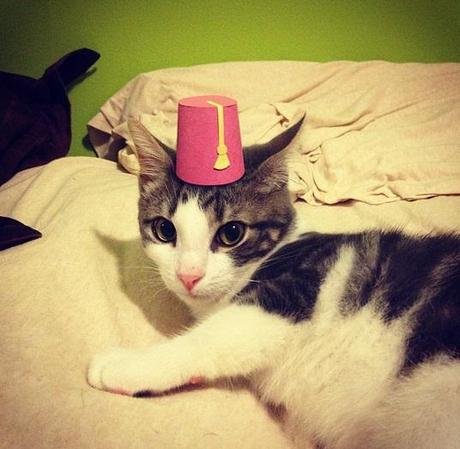Cat With Fez Hat