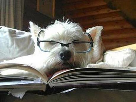 Dog Reading Law Books
