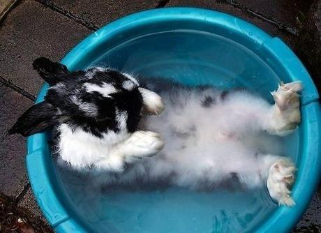 Rabbit in a Bucket