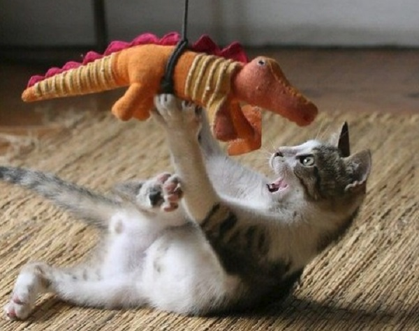 Ten Cats Who Have a Dragon as a Best Friend