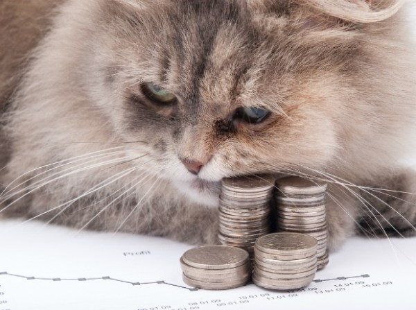 Top 10 Best Images of Cats With Money