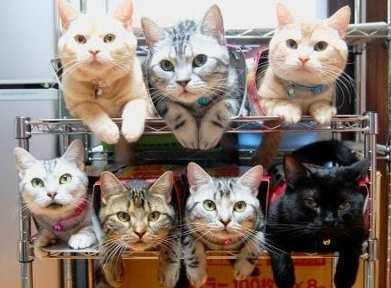 Top 10 Funniest Ways to Organise Cats
