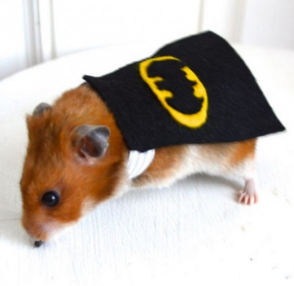 Top 10 Funny Animals Dressed as Batman