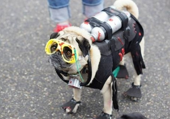 Top Funny Animals Scuba Diving Gear