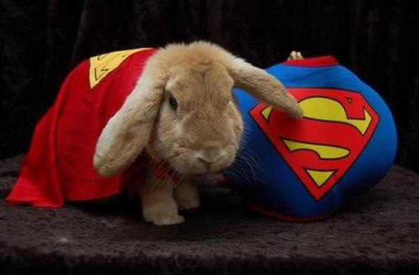 Rabbit in a Superman Costume