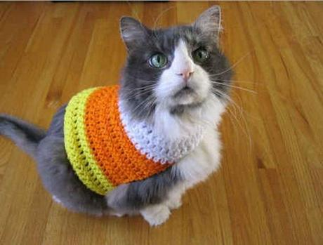 Cat Dressed as Candy Corn