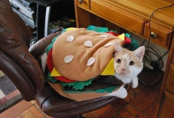Cat Dressed as Burger