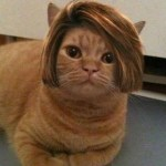 Top 10 Funny Images Of Cats Wearing Wigs