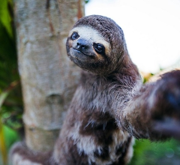 Top 10 Funny and Best Animal Selfies