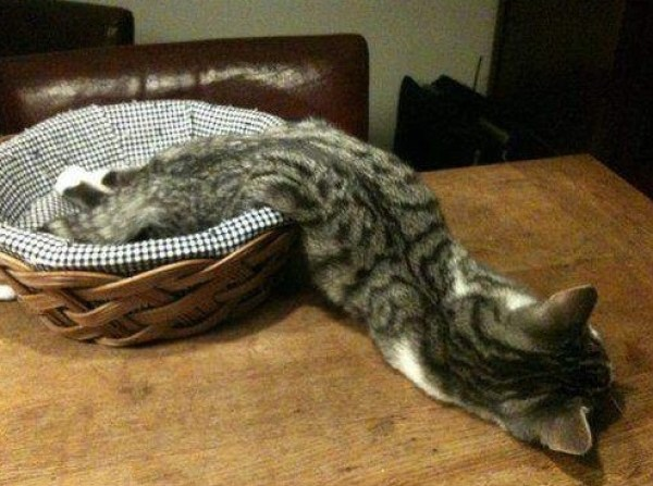 Top 10 Funny Images of Cats Bending Reality
