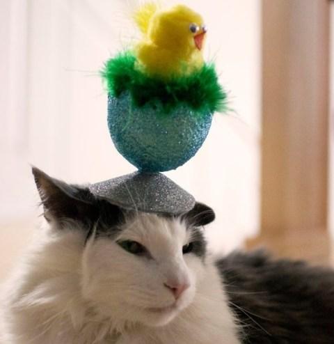 Cat Wearing Funny Chick in Egg Easter Bonnet