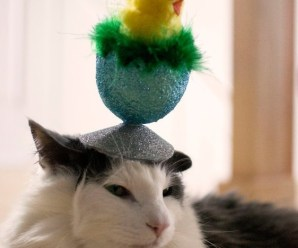 Top 10 Images of Cats Wearing Easter Bonnets