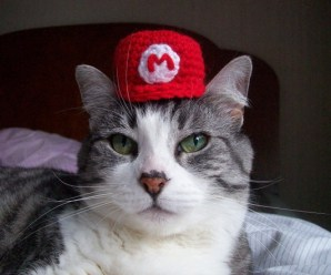 Ten of the Funniest Pictures of Cats in Tiny Hats
