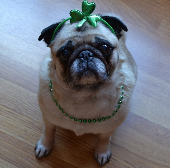 Saint Patrick's Day Dog