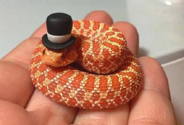 Snake Wearing Tophat