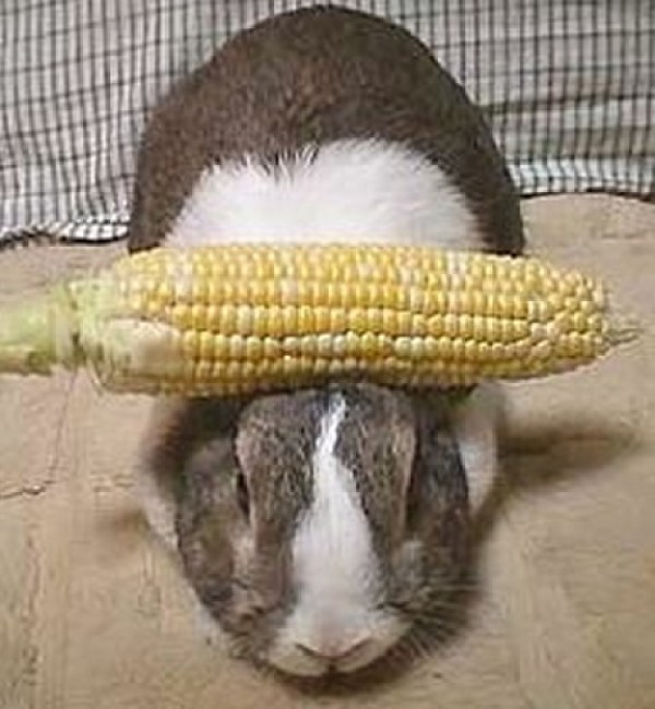 Top 10 Best Images of Things Balanced on Rabbits Heads
