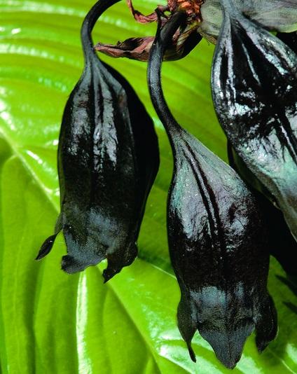 Top 10 Amazing Plants That Look Like Animals