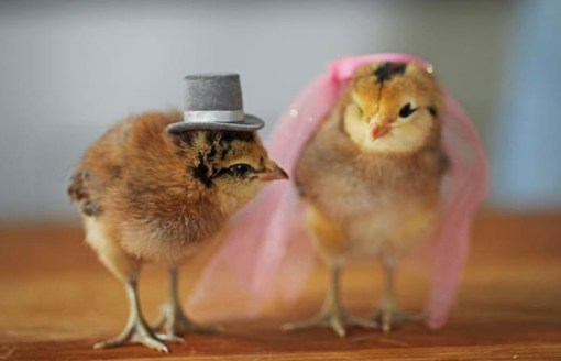 Top 10 Baby Chicks in Hats