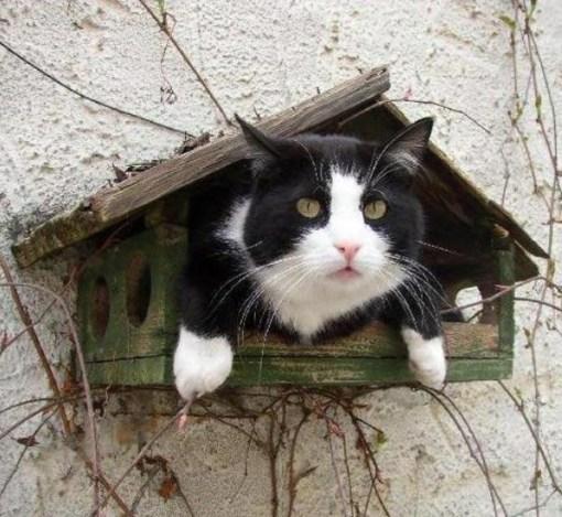 Top 10 Cats In Bird Houses