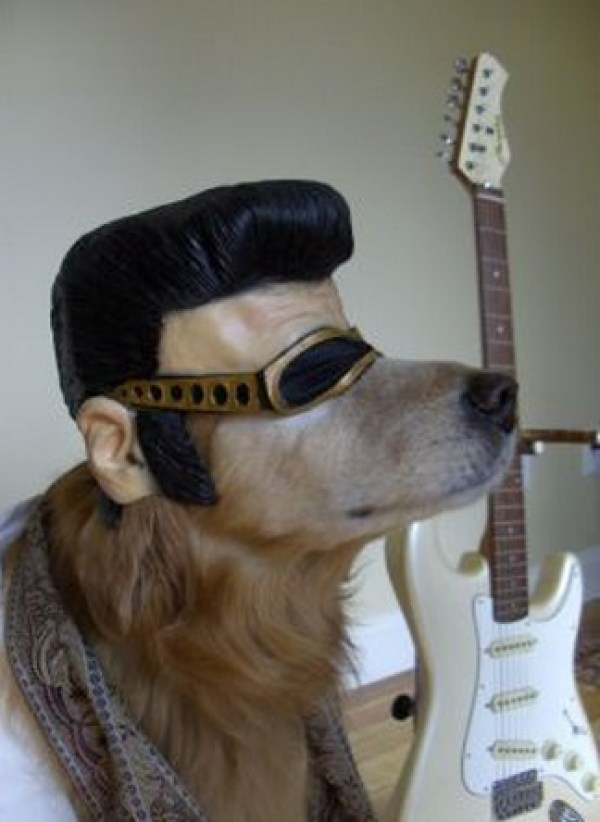 Top 10 Elvis Presley Dogs