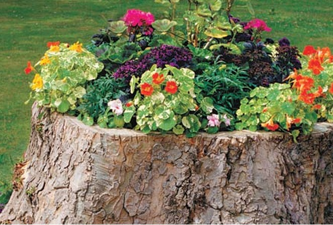 Top 10 Amazing Things to do With Tree Stumps