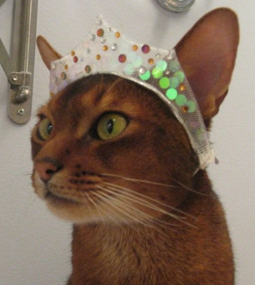Top 10 Images of Cats Wearing a Tiara