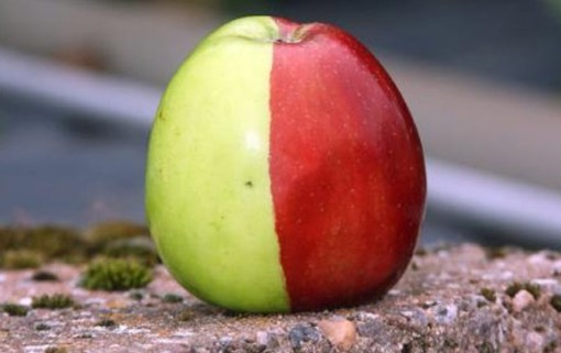 Top 10 Strange Rare And Unusual Apples