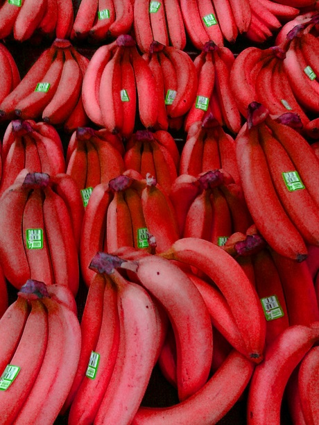 Top 10 Strange, Rare and Unusual Bananas