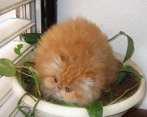 Top 10 Funny Images of Cat Plants