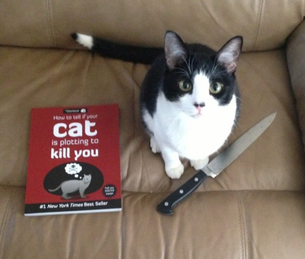 Top 10 Images of Cats Plotting to Kill People
