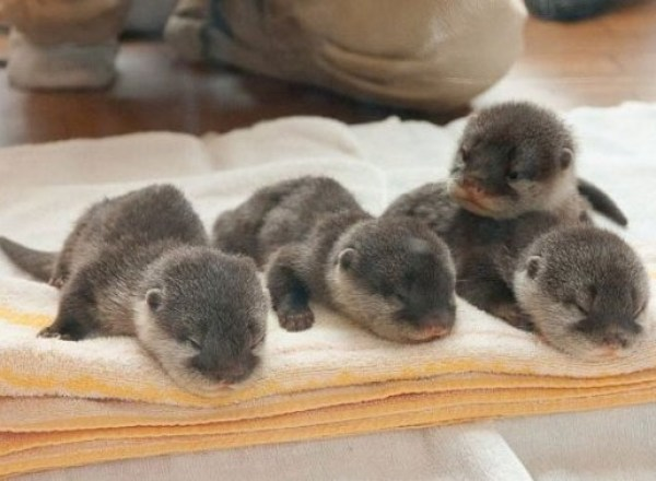 Ten Super Cute Newborn Animals Who Are Too Adorable for Words!