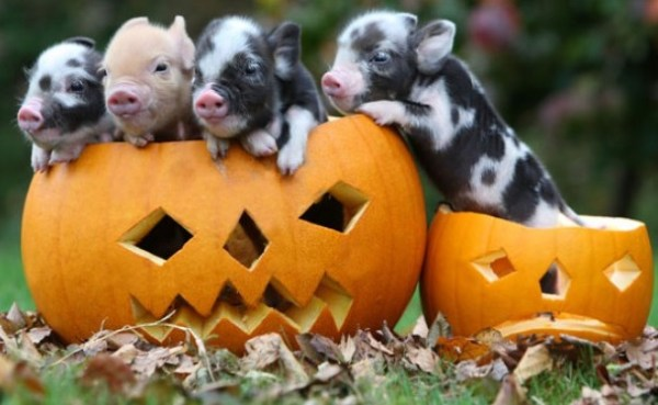 Top 10 Animals in Pumpkins