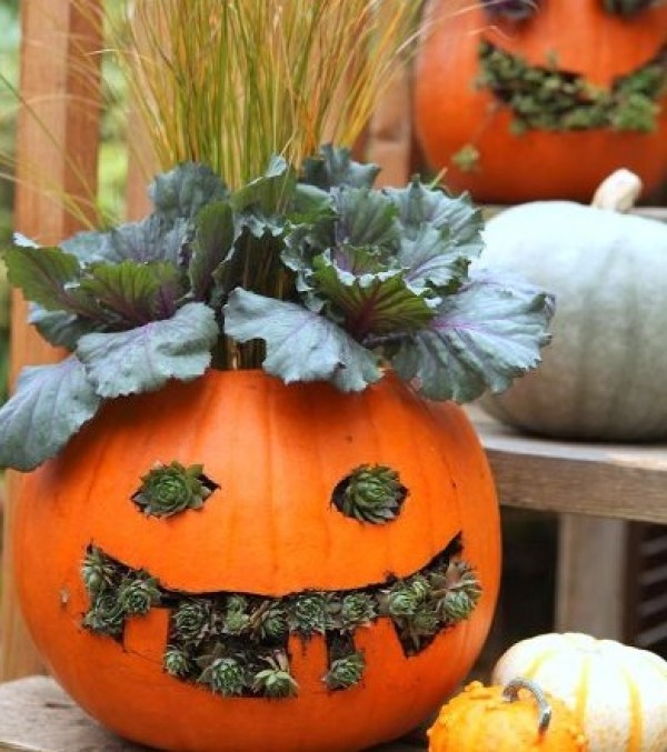 Top 10 Best Designs for Pumpkin Planters