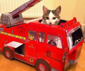 Ten Cats in Toy Vehicles Driving Their Owners Crazy